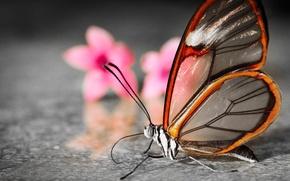 Wallpaper blur, translucent, flowers, butterfly, wings