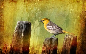 Picture style, background, bird