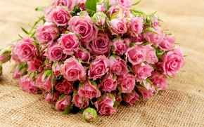 Picture flowers, petals, bouquet, pink, roses, buds, leaves