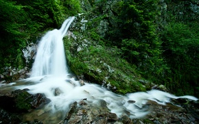 Picture stones, photo, rocks, plants, waterfall, nature, trees, stream forest, waterfall, green life, water, greens, trees, ...