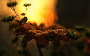 Picture summer, macro, sunset, flowers, nature