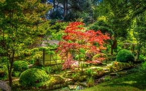 Wallpaper Park, Knutsford, trees, the bushes, UK, Tatton Park, gazebo, grass