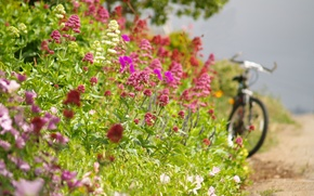 Picture road, summer, flowers, bike, roadside