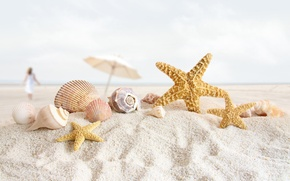Picture sand, beach, shell, starfish, shell
