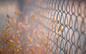 Picture leaves, background, widescreen, Wallpaper, the fence, blur, fence, gate, the fence, wallpaper, leaves, widescreen, leaves, ...