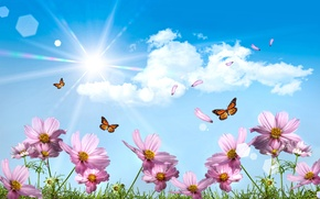 Wallpaper the sun, butterfly, The sky