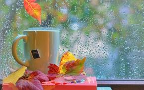 Picture autumn, leaves, drops, rain, books, window, Cup, still life