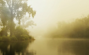 Picture forest, summer, fog, lake, morning