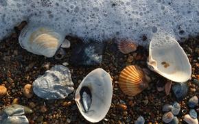 Picture foam, shell, sea, stones