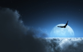Picture stars, clouds, bird, the moon