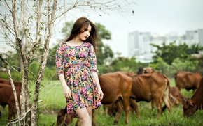 Picture girl, background, cows