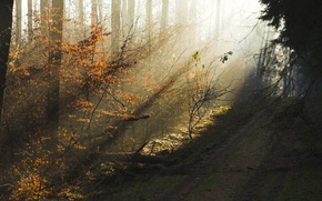 Wallpaper beauty, morning, road, trees, the sun's rays, the evening, haze, autumn, forest