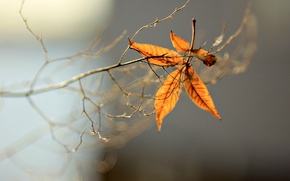 Picture leaves, macro, background, tree, widescreen, Wallpaper, blur, branch, wallpaper, leaves, widescreen, background, full screen, HD …