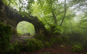 Picture forest, summer, fog, rock, arch