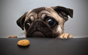 Picture eyes, food, dog