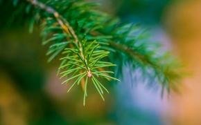 Picture macro, nature, herringbone, twigs, needles