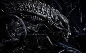 Picture teeth, stranger, Giger, Alien