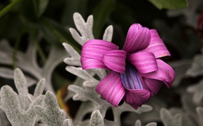 Picture flower, nature, beautiful, Curlsby Candy