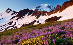 Picture the sky, snow, flowers, mountains, meadow