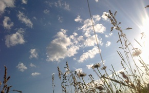 Picture the sky, grass, the sun, flowers, chamomile