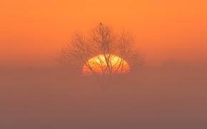 Picture night, fog, bird, the moon