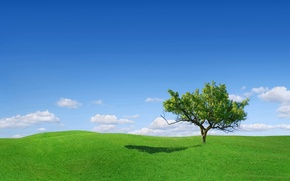 Picture green, grass, sky, landscape, tree