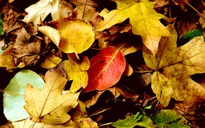 Picture autumn, leaves, yellow leaves, autumn leaves