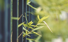 Picture greens, nature, metal, sprouts, the fence, plant, fence, rod