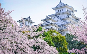 Picture trees, castle, Japan, Sakura, pagoda