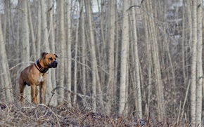 Picture forest, dog, spring