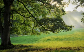 Picture forest, grass, leaves, nature, tree, grass, summer tree photos