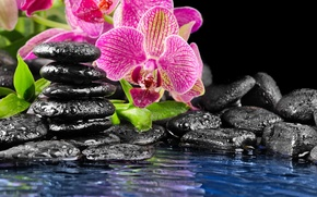 Picture flower, water, stones, pink, Orchid, black, flat, drops on the rocks