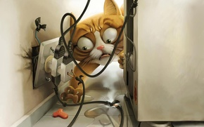 Picture eyes, cat, figure, outlet, food, current