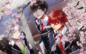 Picture Sakura, window, form, flowering, three, art, starry sky, students, kazuaki, starry sky, suzuya, yoh, kanata