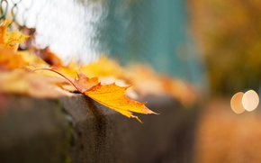 Picture bokeh, macro, sheet, the fence, mesh, autumn