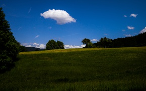 Picture Clouds, Sky, Grass, Flowers, Summer, View, Trees, Meadow, Sunny, Woods, The black forest