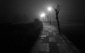 Picture road, light, night, fog, posts, depression, the sidewalk, Melancholy