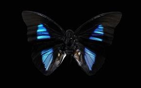 Picture background, black, butterfly, dark