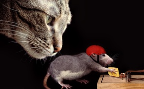Picture cat, helmet, the situation, rat, face, cheese, mousetrap, cat