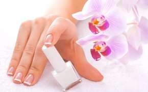 Picture flowers, hand, nails, Orchid, lacquer, bottle, French manicure