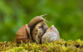 Picture macro, love, snails