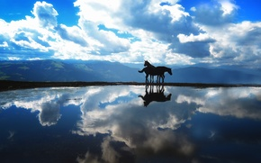 Picture the sky, water, horses