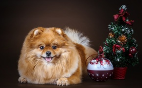 Picture tree, ball, Spitz