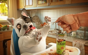 Picture dog, food, the owner, lunch