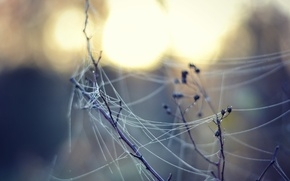 Picture nature, web, branch