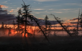 Picture the sky, trees, fog, Sunrise, dry, glow