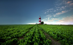 Picture field, nature, lighthouse