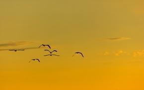 Picture summer, flight, birds, sunny