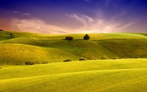 Picture field, field, nature, hills, the sky, grass, landscape