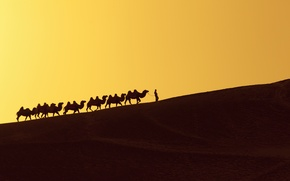 Picture desert, dune, person, camels
